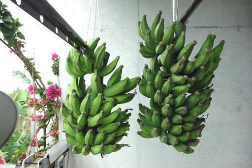 バナナ-f DSC01684