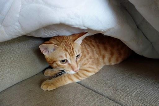 子猫-a DSC01696