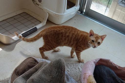 子猫-b DSC01697