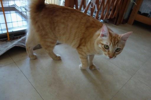 子猫-c DSC01710