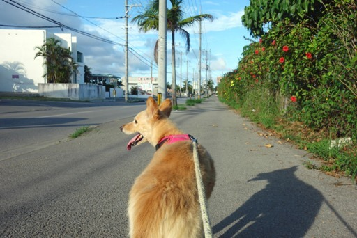 散歩-a DSC02015