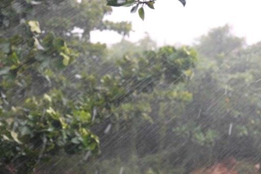 全国雨-e DSC01500