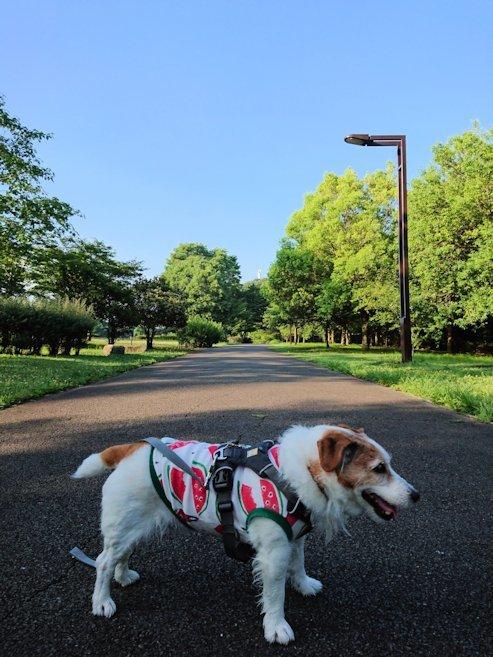 2018長岡公園440
