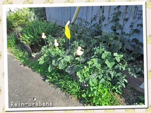 プリンスメロン&ミニトマトの畑~♪