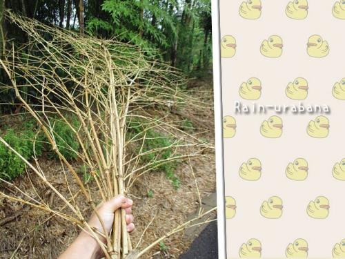 竹の枝集め♪