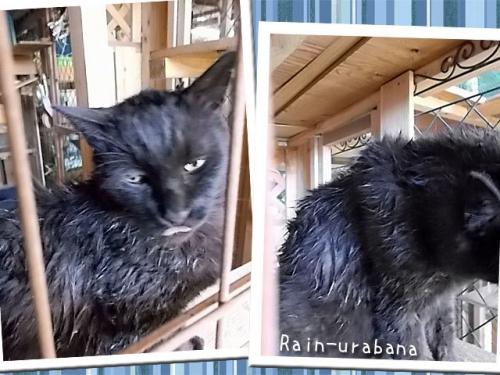 クロスケずぶ濡れ!