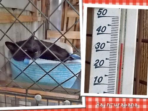 35℃ならセェ~フ!