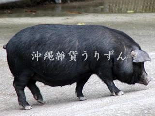 あぐー豚,黒豚