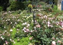 ガーデン比叡と延暦寺ー9