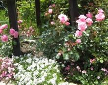 ガーデン比叡と延暦寺ー13