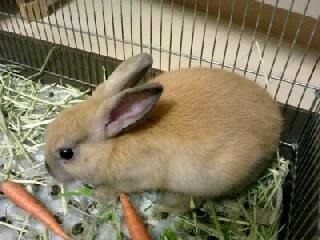 ミニウサギ(3)