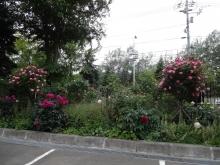 伏古拓北通側(社屋向かって前の左の方)の花