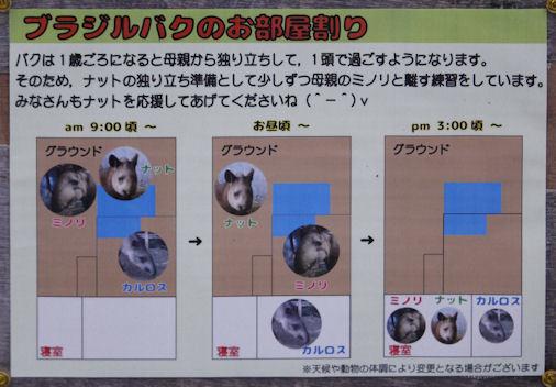 '18.6.10 tapir 6910