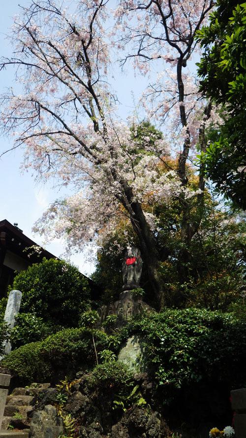 石仏の上に桜