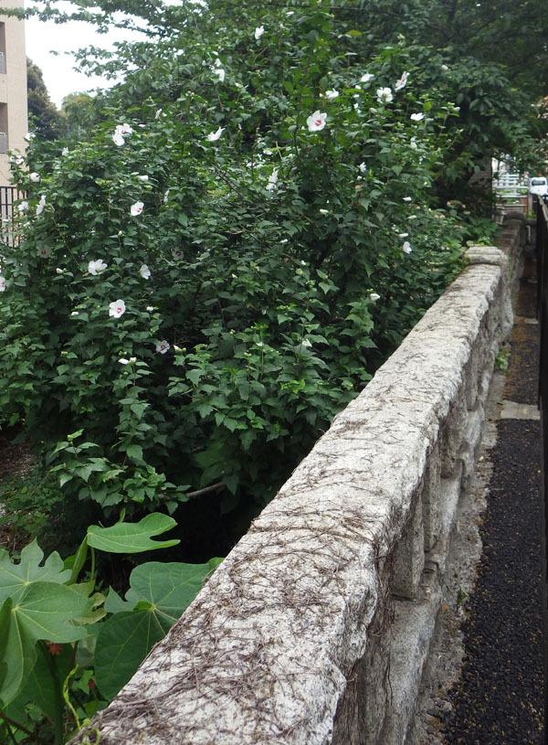 橋 池尻橋の跡