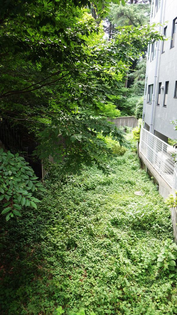 池尻橋からの暗渠の道
