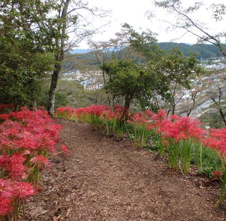 30_10_2 ヒガンバナ 茂木の城山公園 3