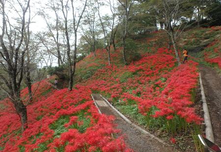 30_10_2 ヒガンバナ 茂木の城山公園 9