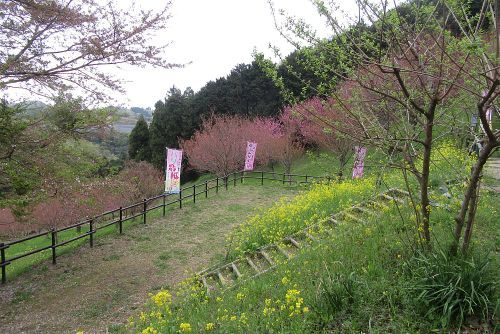 八重桜の里