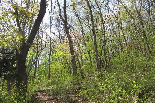 雑木林の新緑