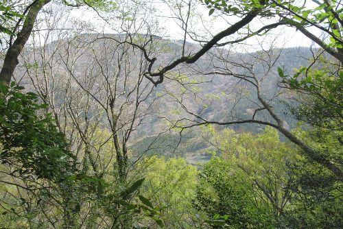 明神ヶ岳と新緑