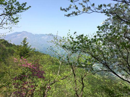女峰山とツツジ
