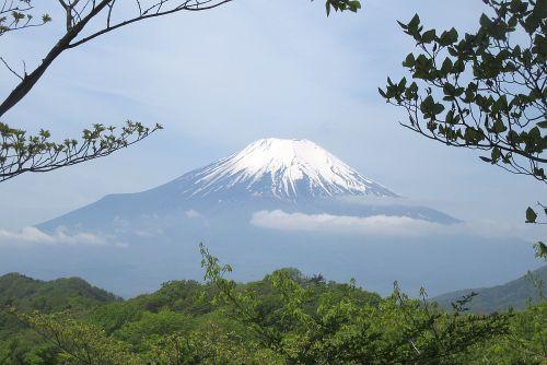 木々の合間から見た富士山