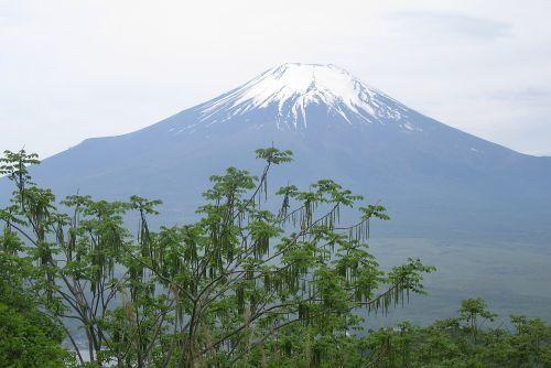 富士山とオニグルミ