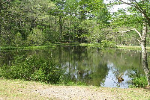 新緑美しいみどりヶ池