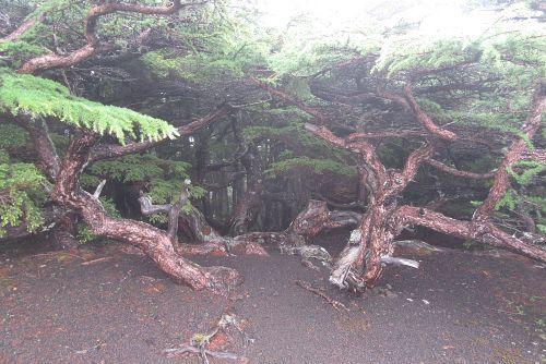 奥庭の樹木