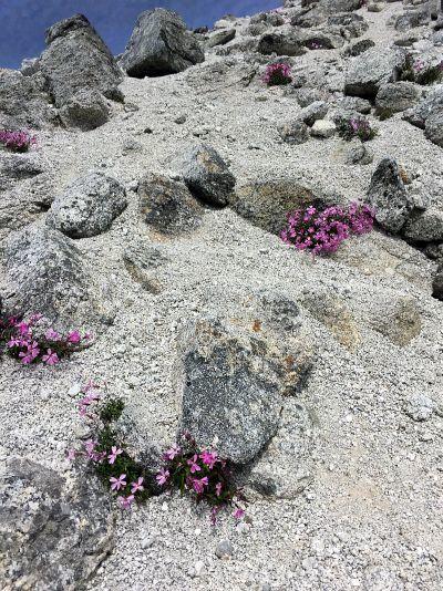 白砂とピンク花