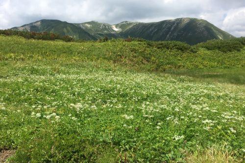 花見平から双六岳