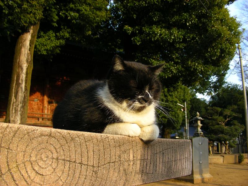 神社ベンチの黒白猫