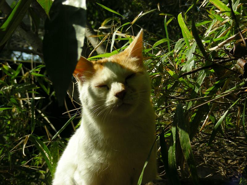 茂みの中の白茶猫