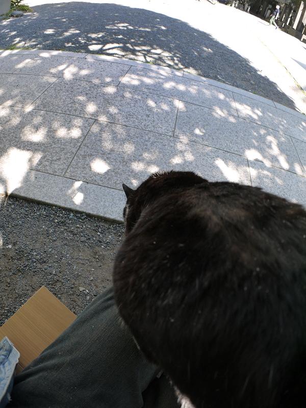 木漏れ日にダイブする黒白猫1