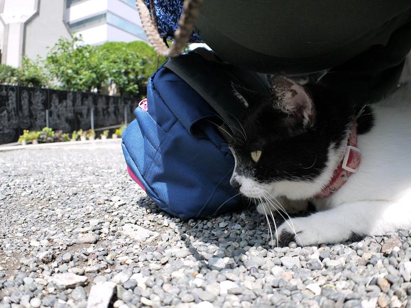 おしりの下の白黒猫1
