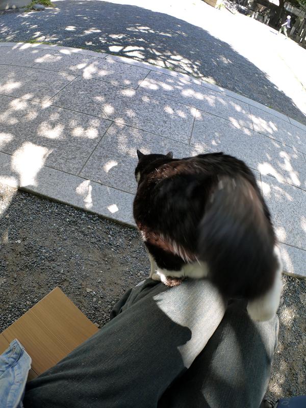 木漏れ日にダイブする黒白猫2