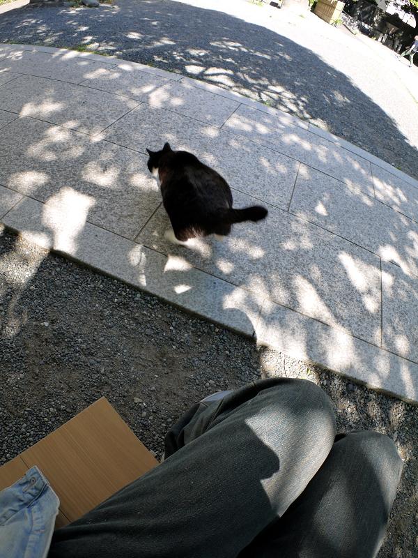木漏れ日にダイブする黒白猫3