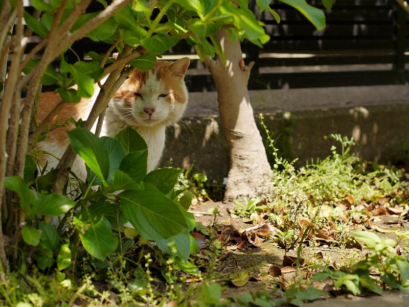 木漏れ日と茶白猫1