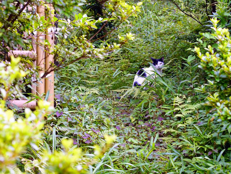 草むら斜面の猫