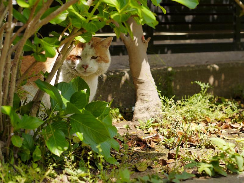 木漏れ日と茶白猫2