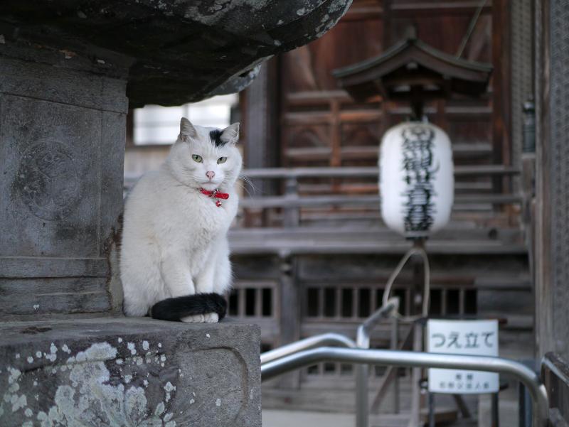 お堂石灯籠白黒猫1