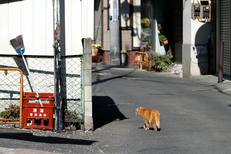 歩く歩く茶トラ猫2
