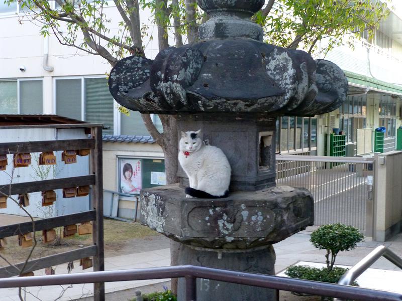 お堂石灯籠白黒猫2