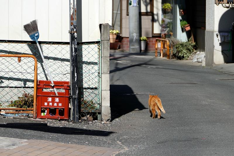 歩く歩く茶トラ猫3