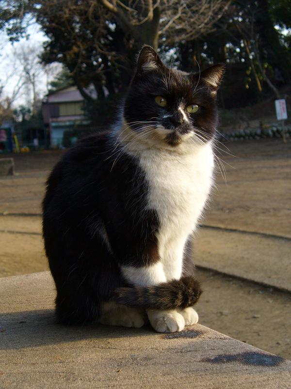神社のベンチと黒白猫2