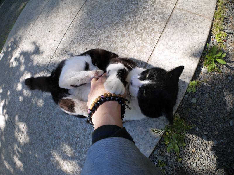 木漏れ日の中で私の手を噛む黒白猫2