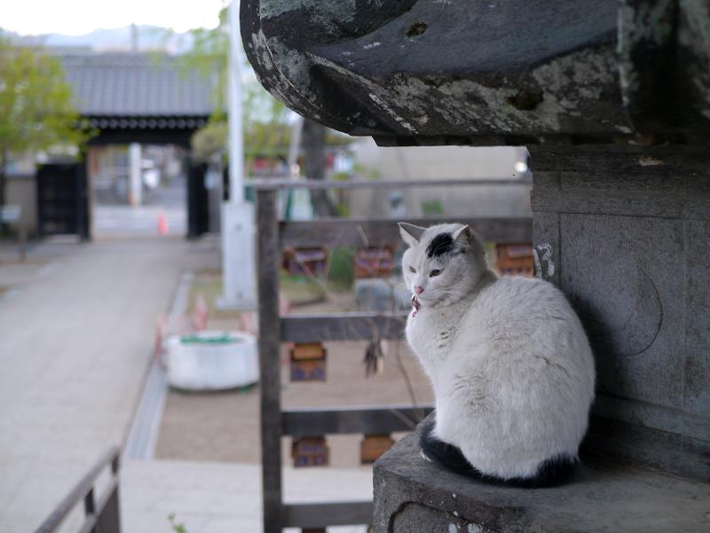 境内石灯籠白黒猫1
