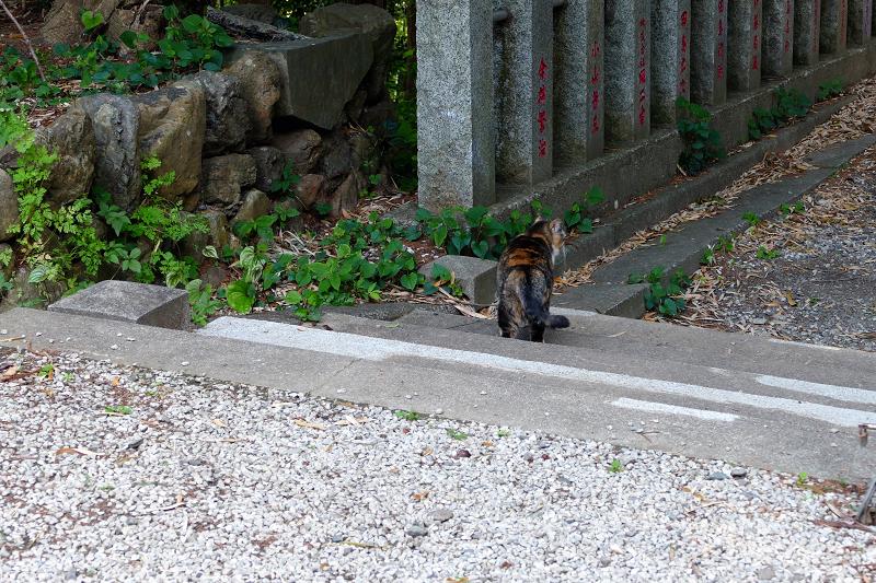 神社竹林三毛猫1