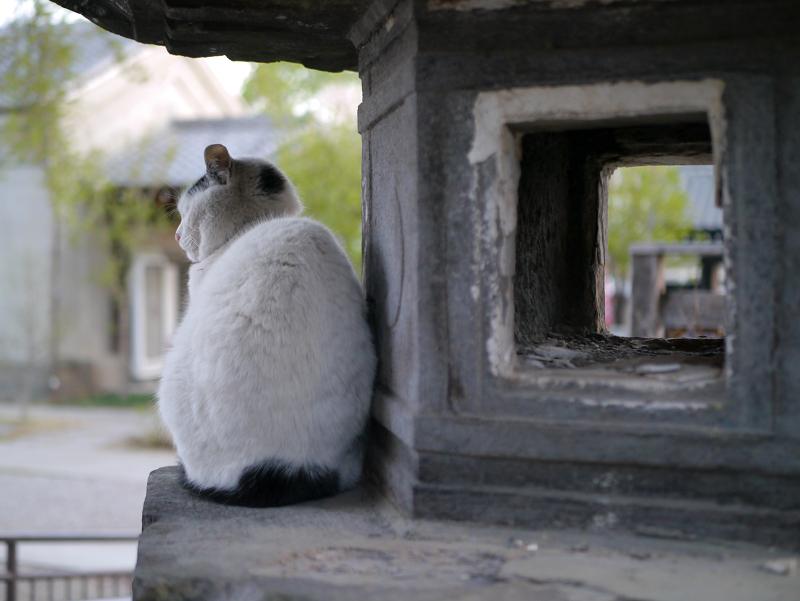 境内石灯籠白黒猫2